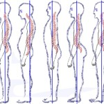 Exercises for Posture
